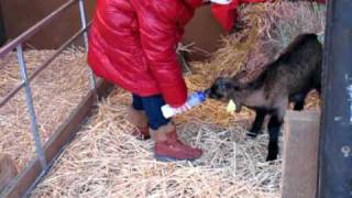 Saint Nicolas L'enfant et - animaux de la ferme- épisode 3-DOMAINE DE RABREUX-20-