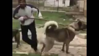 dev kangal