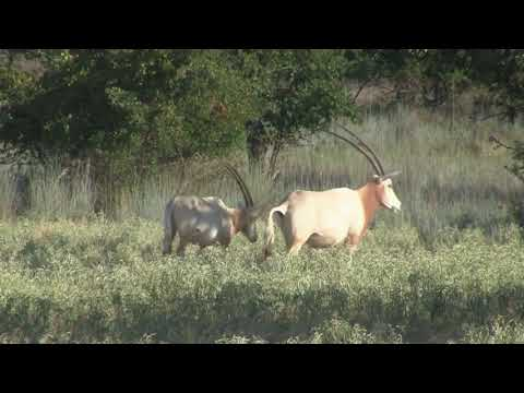 558 Acres Jack County Texas Game Ranch for Sale