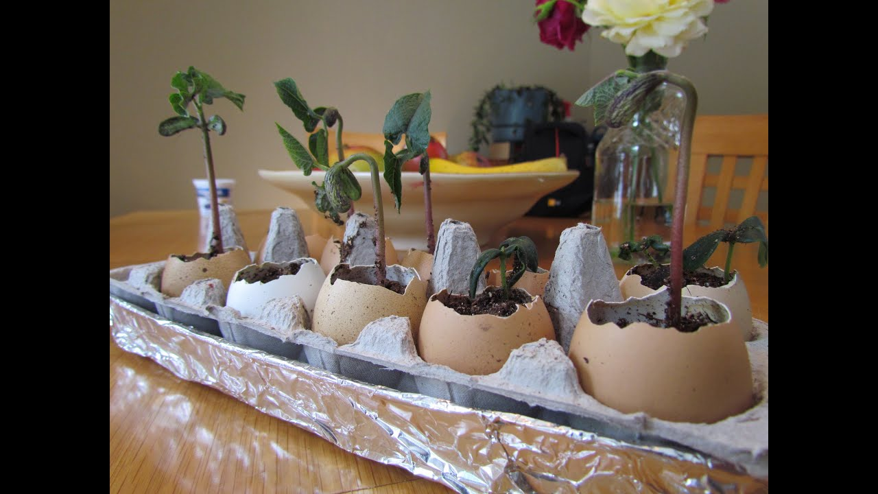 Reusing Eggss as Planters for Starting Seeds! - YouTube on
