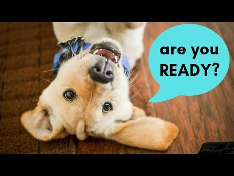 Are you READY for a DOG? 5 Questions to ask yourself