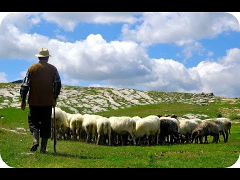 Пастух красавчик управляет овцами в Армении, город Горис \ Shepherd In Armenia