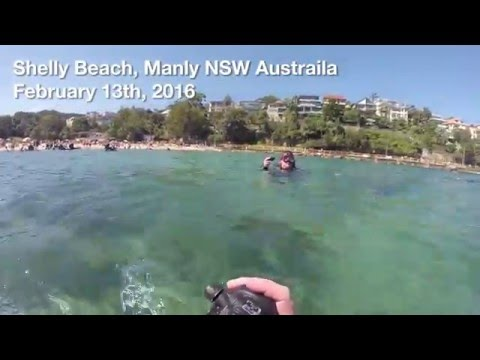 Shore Dive - Shelly Beach, Manly, NSW Australia
