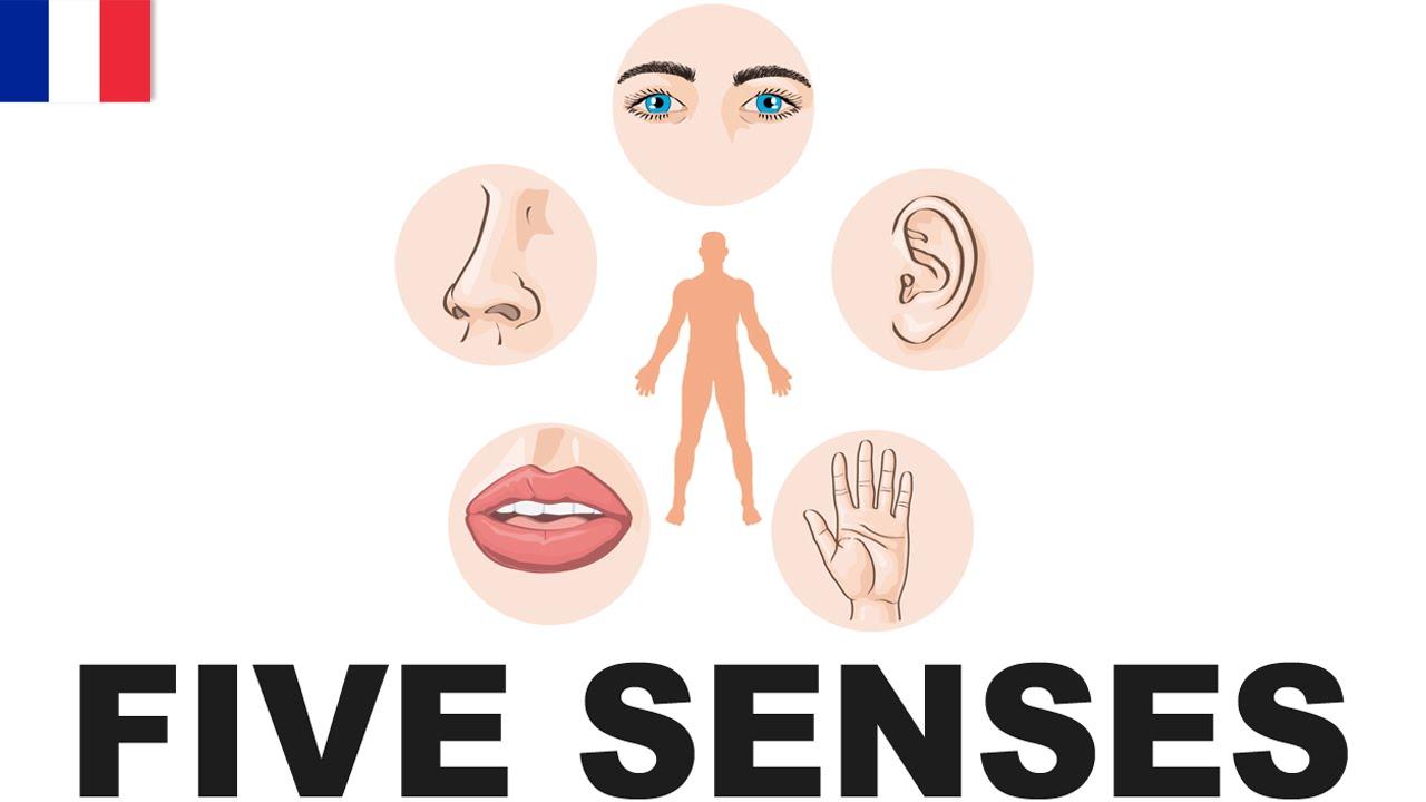 Fabulous Apprendre le vocabulaire anglais - Les cinq sens (Five senses  VJ22