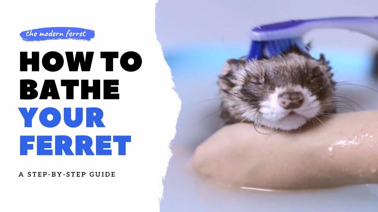 BEST METHOD - How to Bathe Your Ferret | Ferret Care