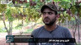 بالفيديو| عنب غزة.. نفحة قصيرة وسط الحصار