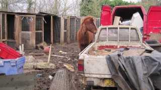 Repeat youtube video Horses rescued from Crunchies Animal Rescue Sanctuary are still recovering