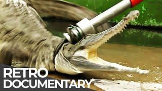 Extreme Jobs: Crocodile Breeder, RLNI Helmsman, Diamond Diver | Retro Doc | Free Documentary