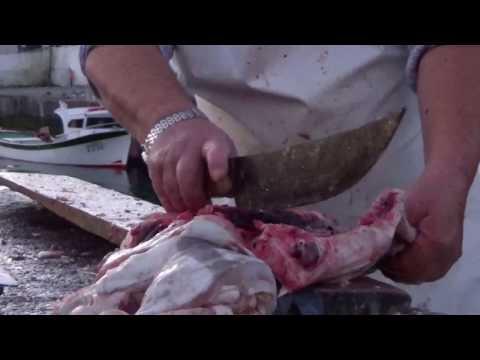 Fishing video, 07H00  am, cut conger Eel / 07H00 da manhã, cortar congro ás postas