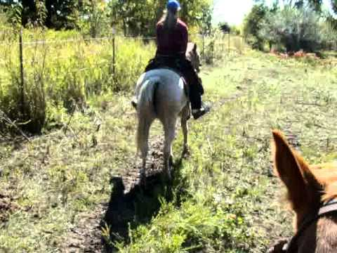 Trail Riding Horses For Sale At Tbars Horse Ranch Silver