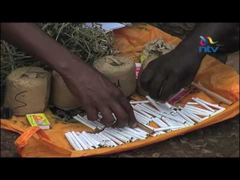 Researcher presents petition on legalising cannabis sativa to the Senate of Kenya