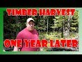 How to Improve Deer Habitat - Timber Harvest Results & Tips