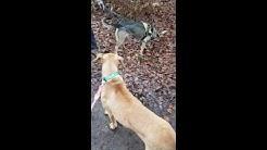 Körpersprache der Hunde Teil 1.1