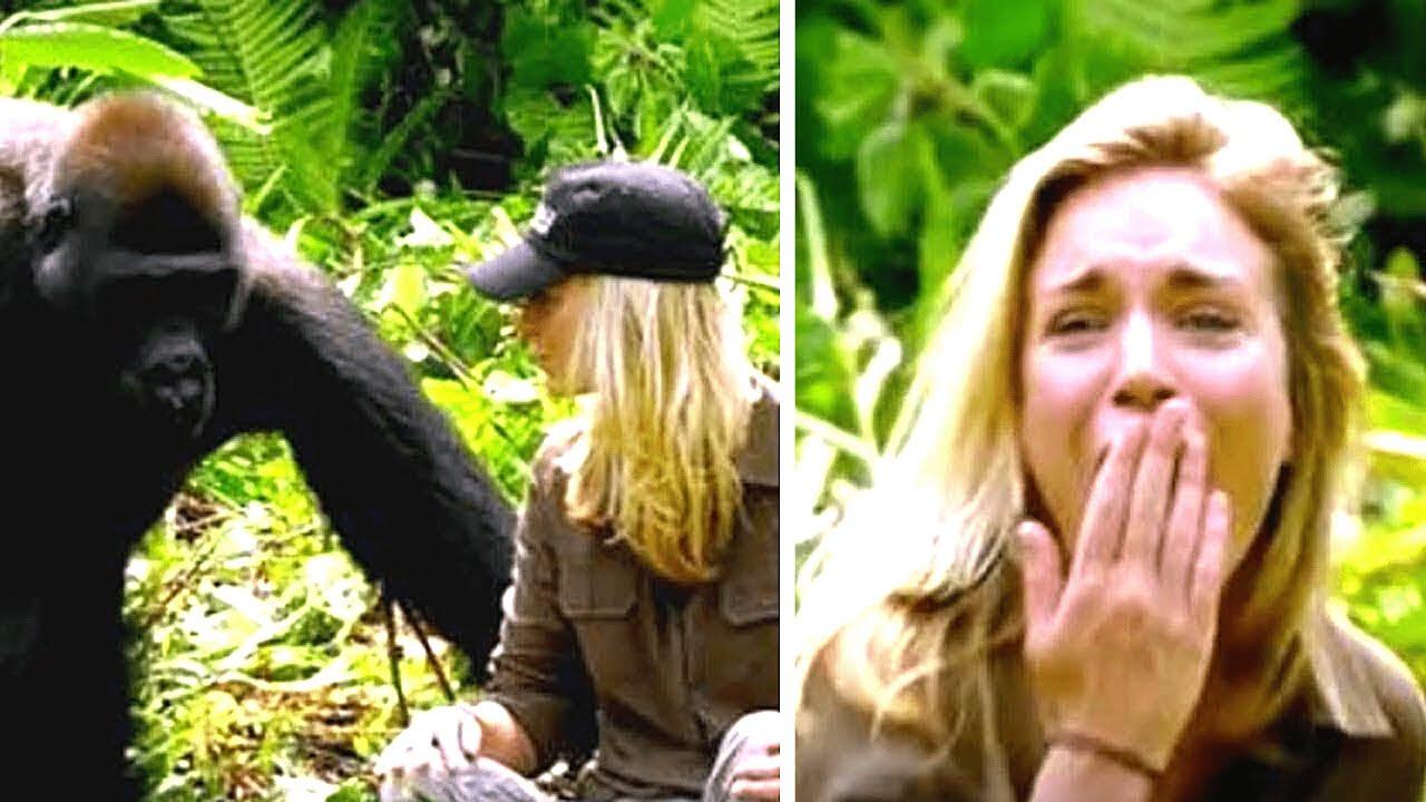 Mann sieht wilde Gorillas nach 15 Jahren wieder, was sie mit seiner Frau machen schockt alle...