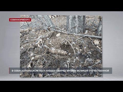 НТС Севастополь: Крупный снаряд времён Великой Отечественной войны нашли в лесу у Севастополя