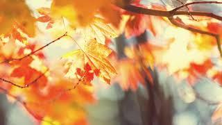 Sezgin Alkan - Ekim ( Cem Adrian ile ) Resimi