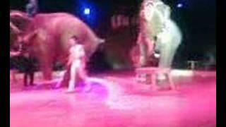 Es un elefante o es que no lo ves