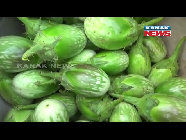 Rayagada Farmers Organic Sweet Corn Farming