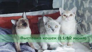 """Выставка кошек """"Мистер кот"""" 11 июня 2016"""
