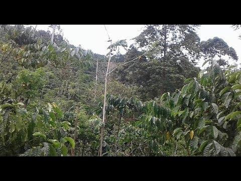 pikat burung menggunakan mp3 jitu banget lihat burung apa saja yang datang