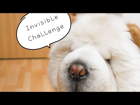 Invisible Challenge / Lazy Chow Chow Wins by John Wick The Chow