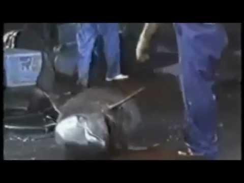 Wild Animal Cruelty