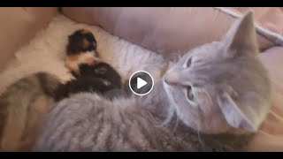WSHS University - How to foster kittens - Intro