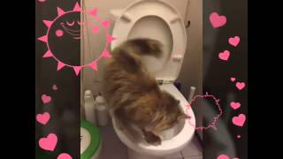 Кошка ходит на унитаз