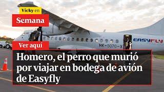 Homero, el perro que murió por viajar en bodega de avión de Easyfly | Vicky en Semana