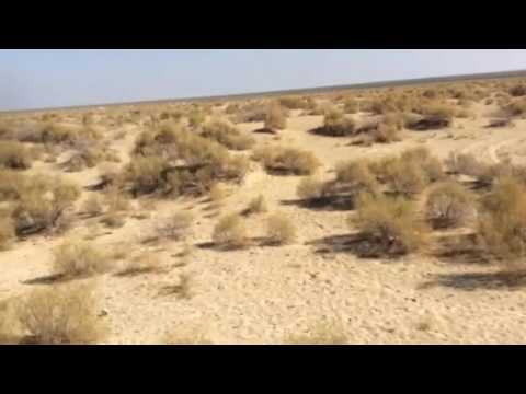 hobbling along the former Aral Sea seabed near Moynak, Uzbekistan