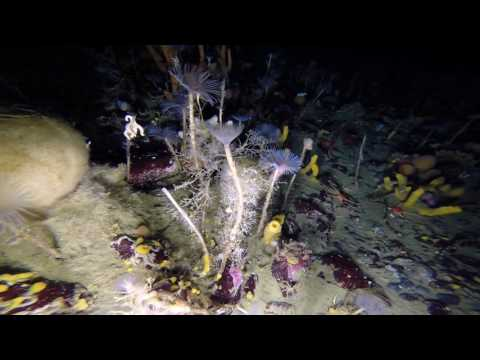 Rare glimpse into Antarctic underwater world