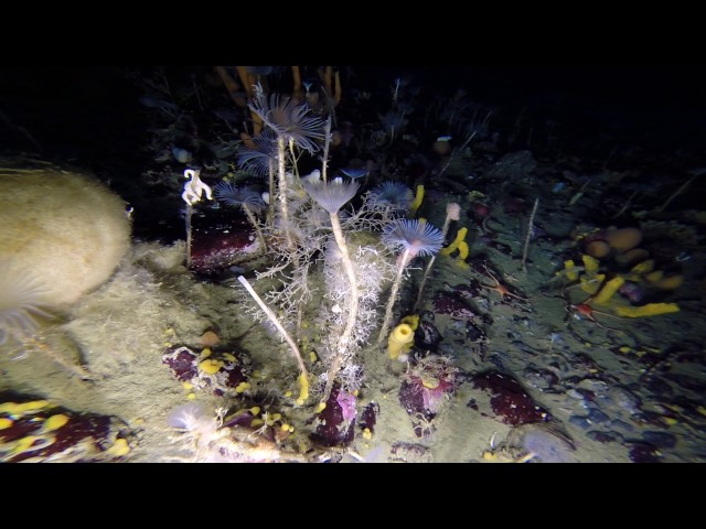 El increíble hallazgo de una cámara debajo del hielo de la Antártida