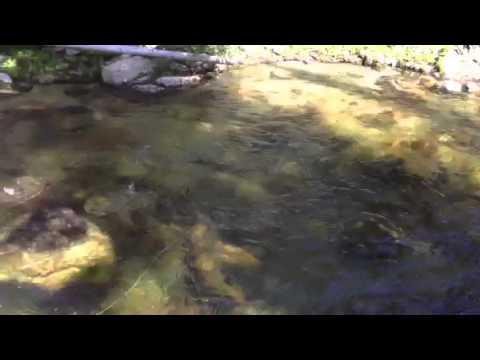 Paul Fishing Lake Fork Creek, McCall ID