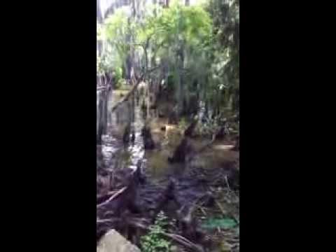 Nature trail near Morgan City, Louisiana