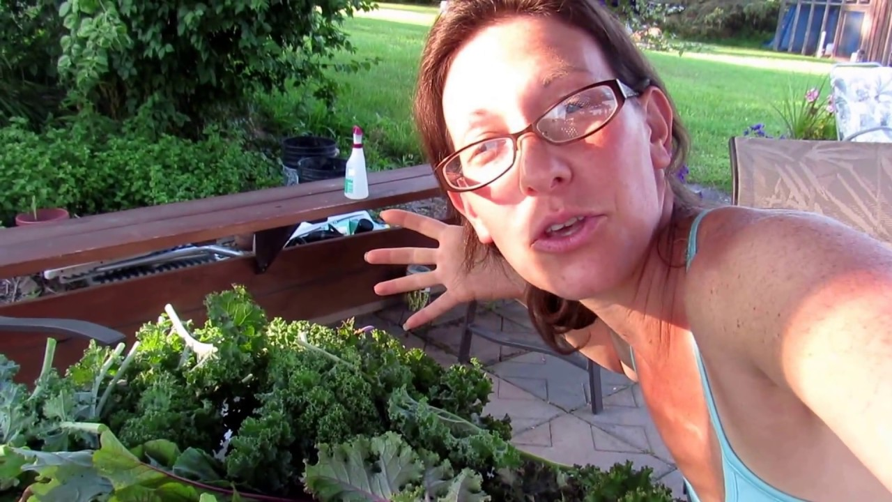 Garden Blanching And Freezing Kale