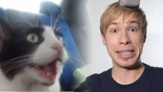 This is Хорошо - Котошок! ( ゚Д゚)[Catshock]