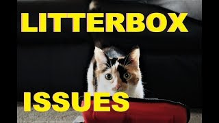 Why Is My Cat Peeing Outside The Litter Box | AniMal Advice