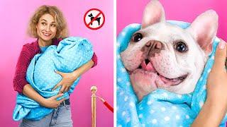 13 طريقة لتمرير الحيوانات الأليفة جوا السينما!