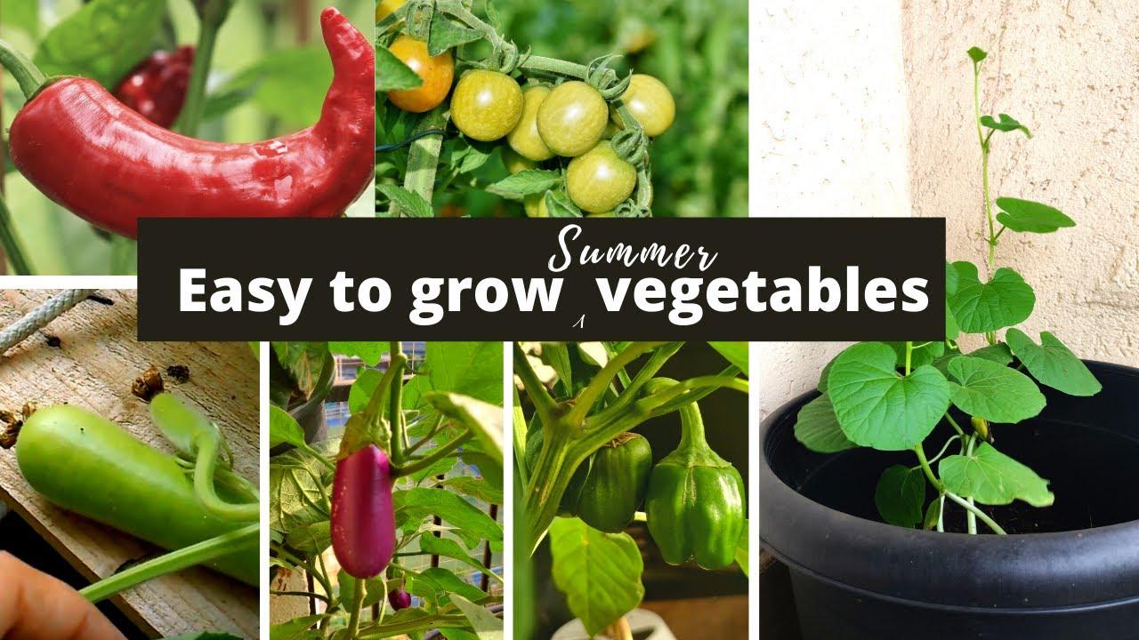 गर्मियों में घर पे उगाने की 5 easy vegetables | Ekta Chaudhary