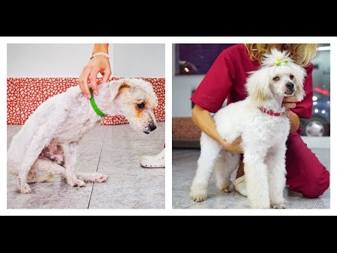 Amazing transformation of dog abandoned on the highway to be hit and killed. Please Share