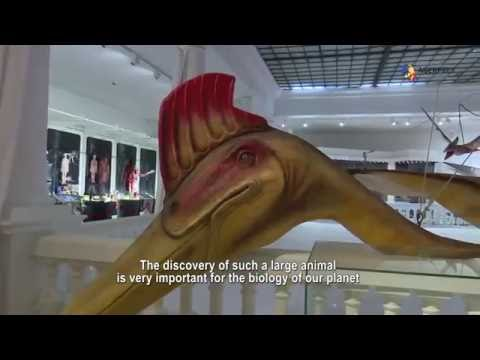 Largest flying dinosaur in the world exhibited at Antipa Museum in Bucharest