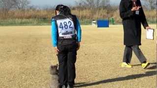 2012年12月16日、ST連合会東日本訓練競技会のCD2にアポロとななが出ま...