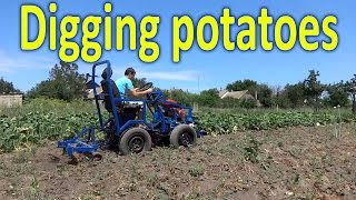 Homemade garden tractor digging potatoes