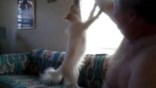 Buddy the dog hanging around!