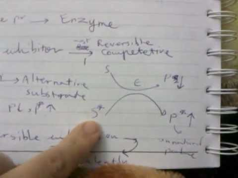 VIDEO0243 basic mechanism of drug action