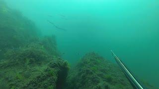 Подводная охота в Черном море как она есть