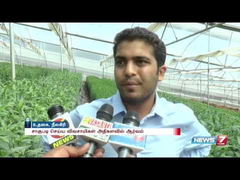 Farmers harvest new foriegn flowers in Ooty   News7 Tamil