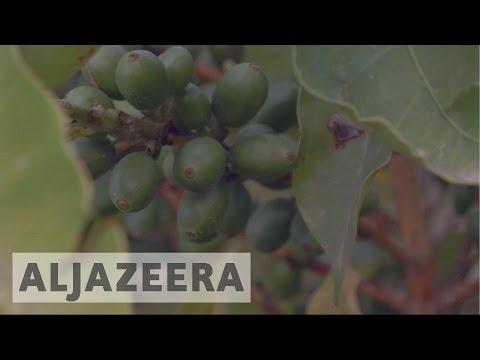 Yemen: Coffee industry struggles amid civil war