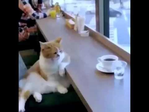 Funny cat-Termenung jauh nun memandang