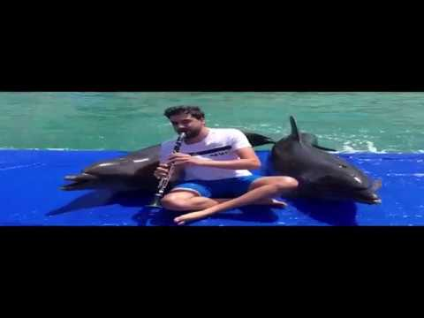 Dolphins Sing Along with Guy Playing Clarinet